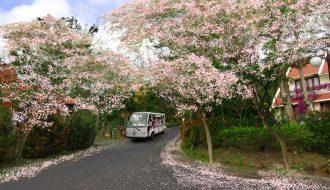 Địa điểm lý tưởng ngắm hoa mùa Xuân