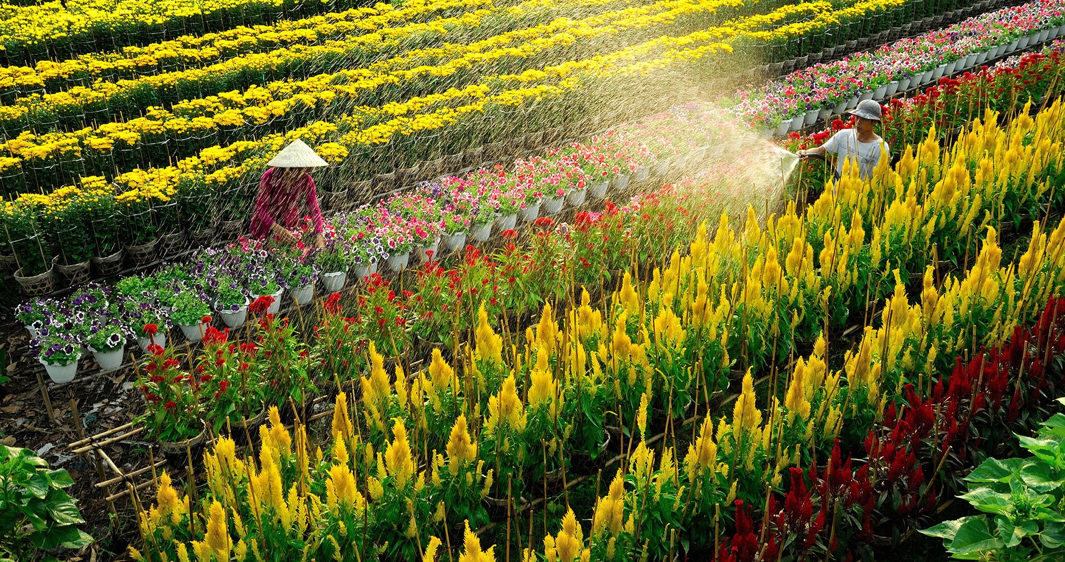 Làng hoa Sa Đéc, trăm hoa khoe sắc