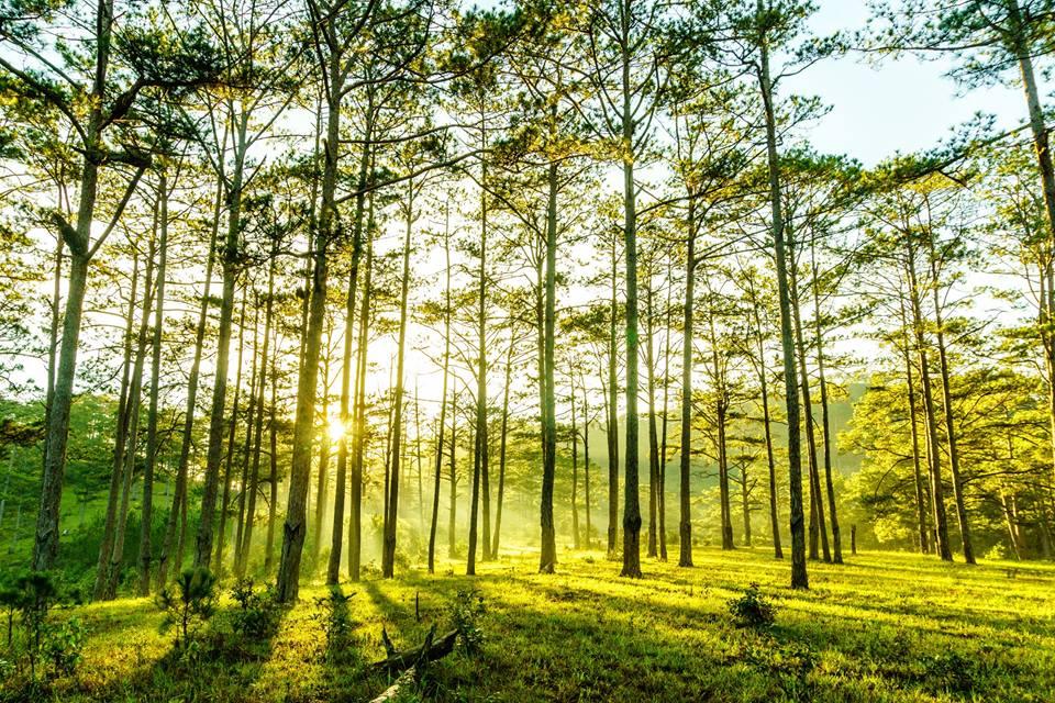 Cắm trại dưới những tán thông xanh mướt, hoạt động bạn không nên bỏ lỡ ở CHƯ YANG SIN
