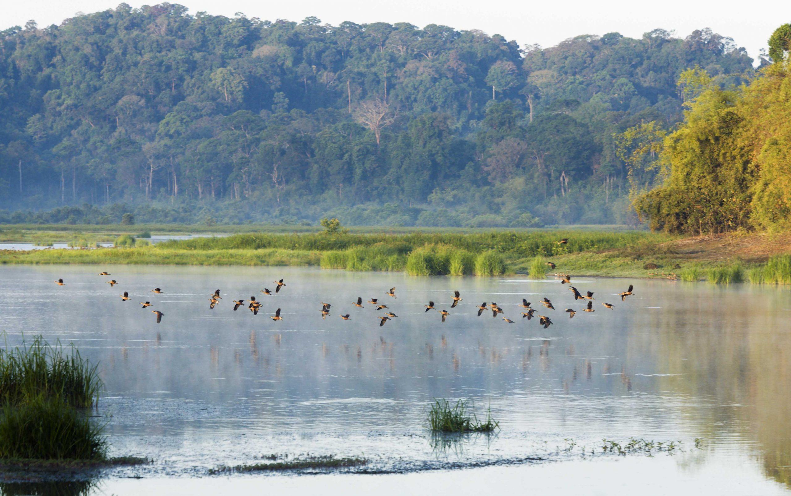 Vườn quốc gia Cát Tiên có hệ sinh thái đa dạng, phong phú