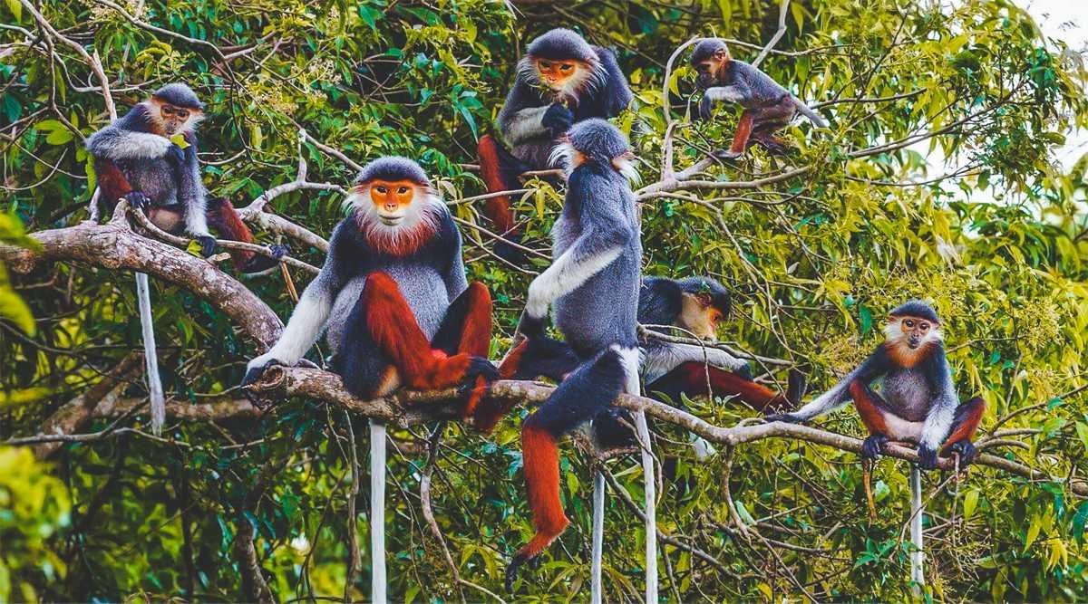 Thiên nhiên hùng vĩ tại 8 vườn quốc gia ở Việt Nam