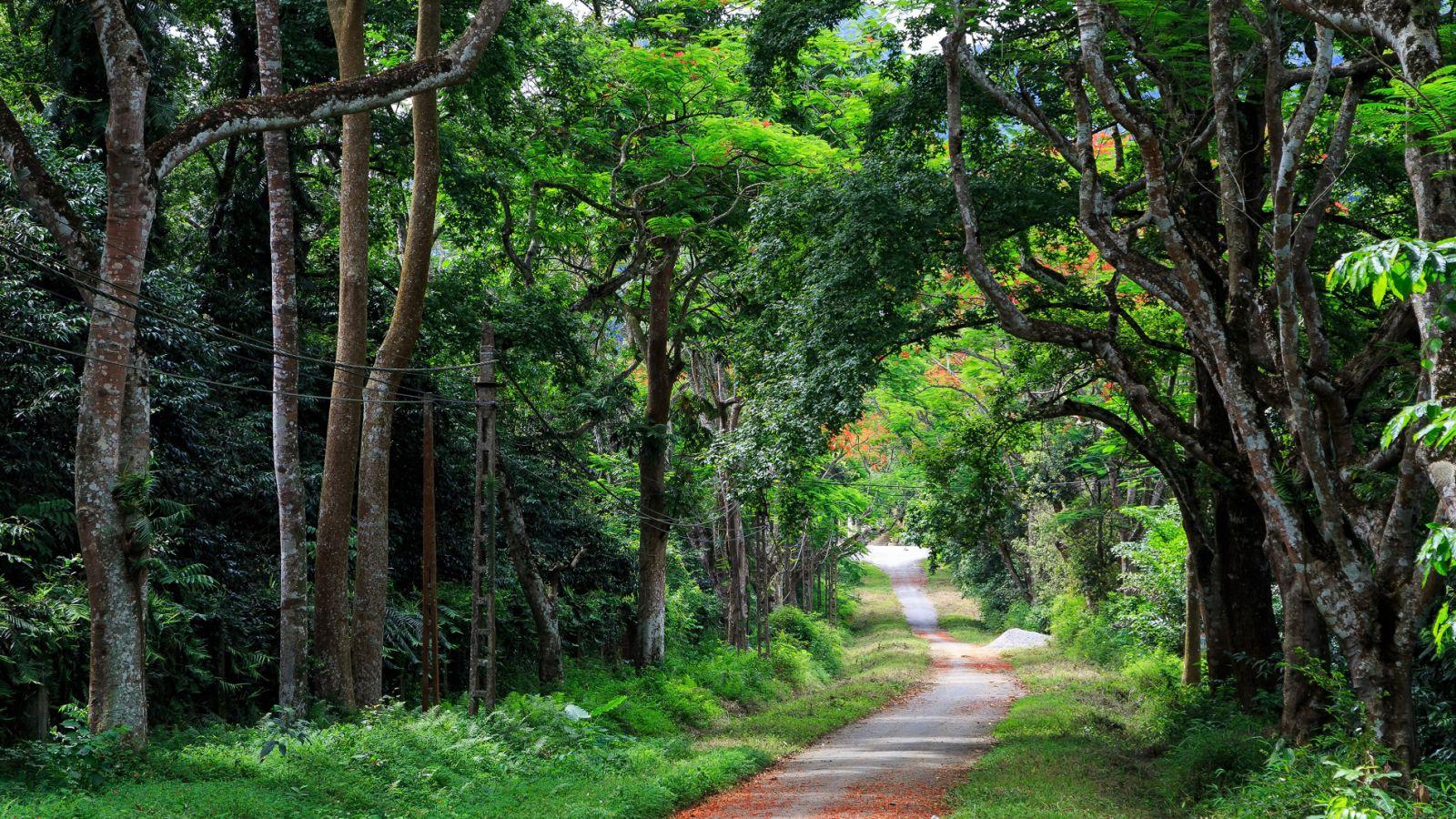 Cúc Phương - Vườn quốc gia đầu tiên tại Việt Nam